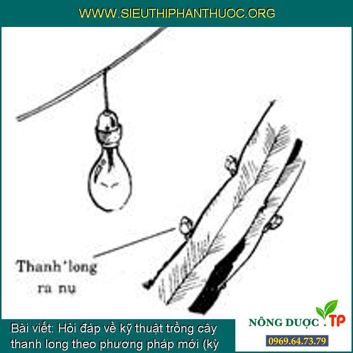 Hỏi đáp về kỹ thuật trồng cây thanh long theo phương pháp mới (kỳ 9)