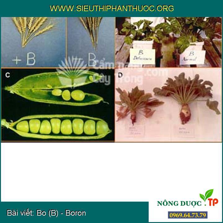 Bo (B) - Boron