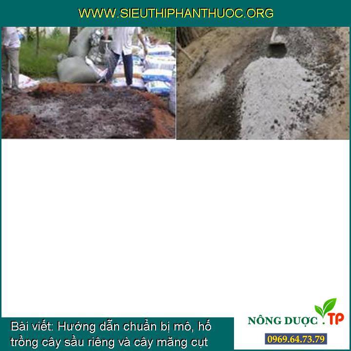 Hướng dẫn chuẩn bị mô, hố trồng cây sầu riêng và cây măng cụt