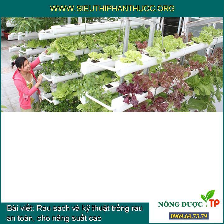 Rau sạch và kỹ thuật trồng rau an toàn, cho năng suất cao