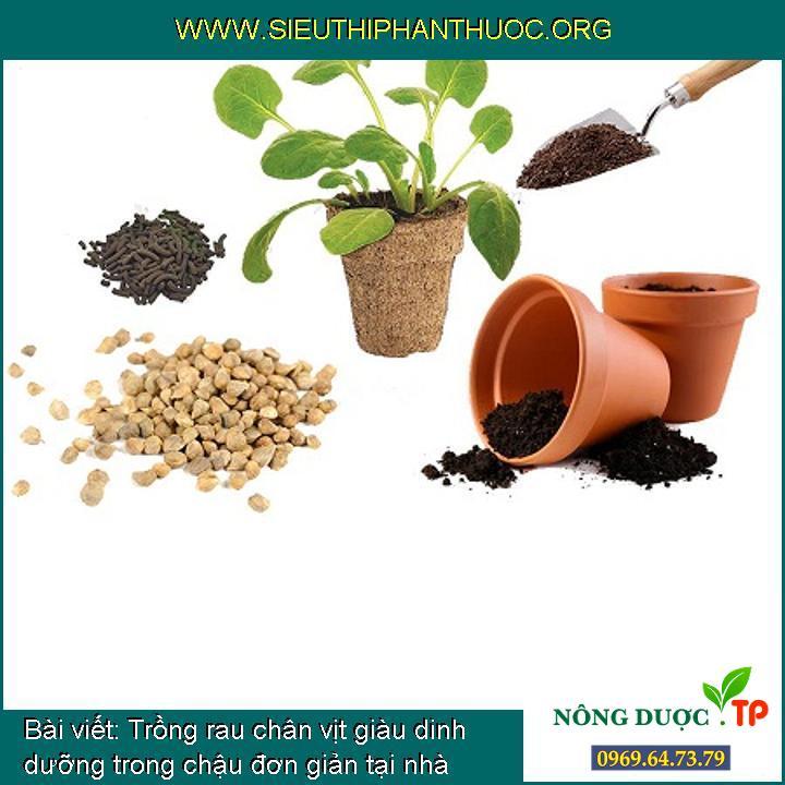 Trồng rau chân vịt giàu dinh dưỡng trong chậu đơn giản tại nhà