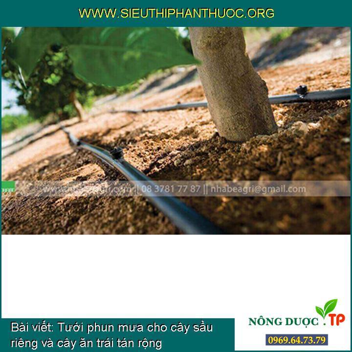 Tưới phun mưa cho cây sầu riêng và cây ăn trái tán rộng
