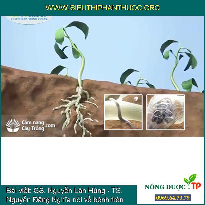 GS. Nguyễn Lân Hùng - TS. Nguyễn Đăng Nghĩa nói về bệnh trên cây Hồ tiêu