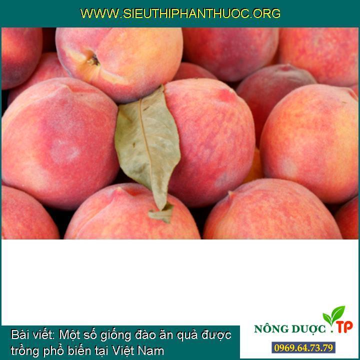 Một số giống đào ăn quả được trồng phổ biến tại Việt Nam