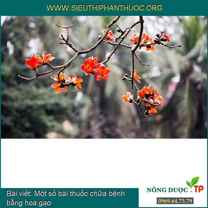 Một số bài thuốc chữa bệnh bằng hoa gạo