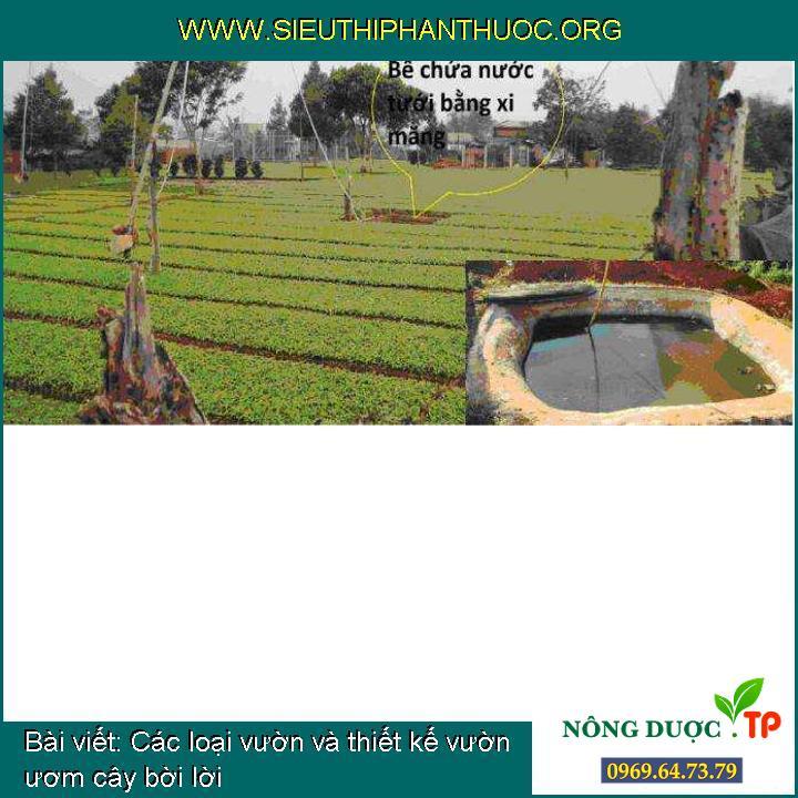 Các loại vườn và thiết kế vườn ươm cây bời lời