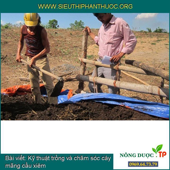 Kỹ thuật trồng và chăm sóc cây mãng cầu xiêm