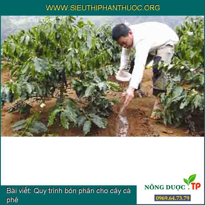 Quy trình bón phân cho cây cà phê