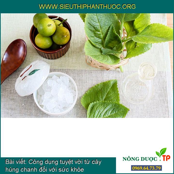 Công dụng tuyệt vời từ cây húng chanh đối với sức khỏe
