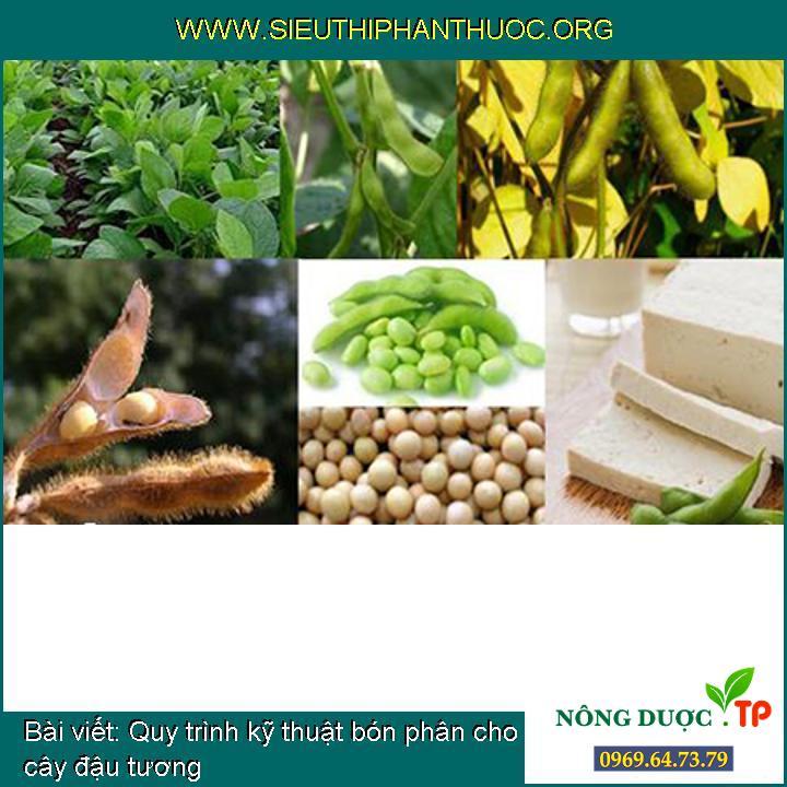 Quy trình kỹ thuật bón phân cho cây đậu tương