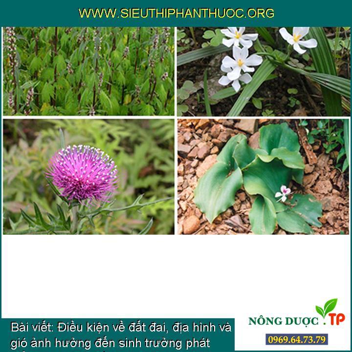 Điều kiện về đất đai, địa hình và gió ảnh hưởng đến sinh trưởng phát triển của cây thuốc (cây dược liệu)