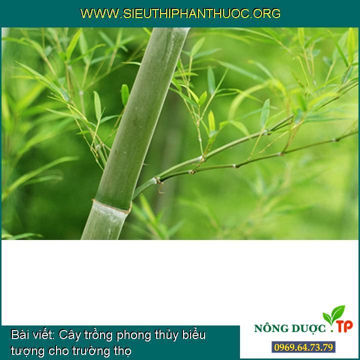 Cây trồng phong thủy biểu tượng cho trường thọ