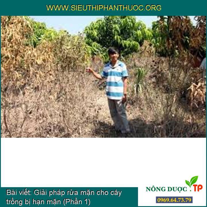 Giải pháp rửa mặn cho cây trồng bị hạn mặn (Phần 1)