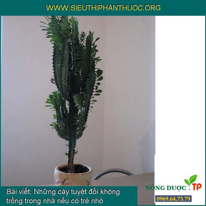 Những cây tuyệt đối không trồng trong nhà nếu có trẻ nhỏ