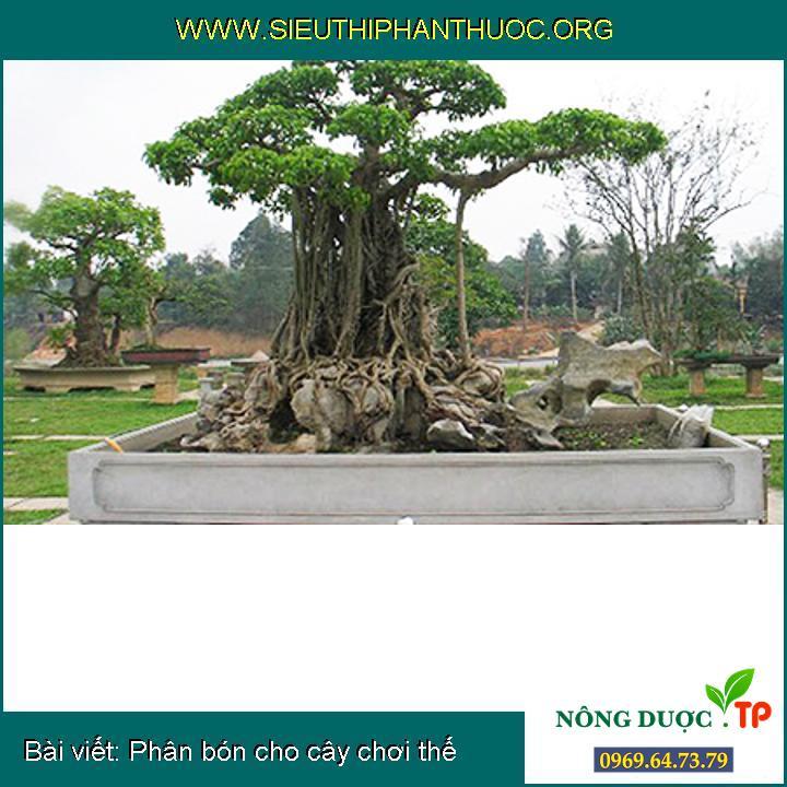 Đặc điểm các loại cây cảnh phổ biến tại Việt Nam