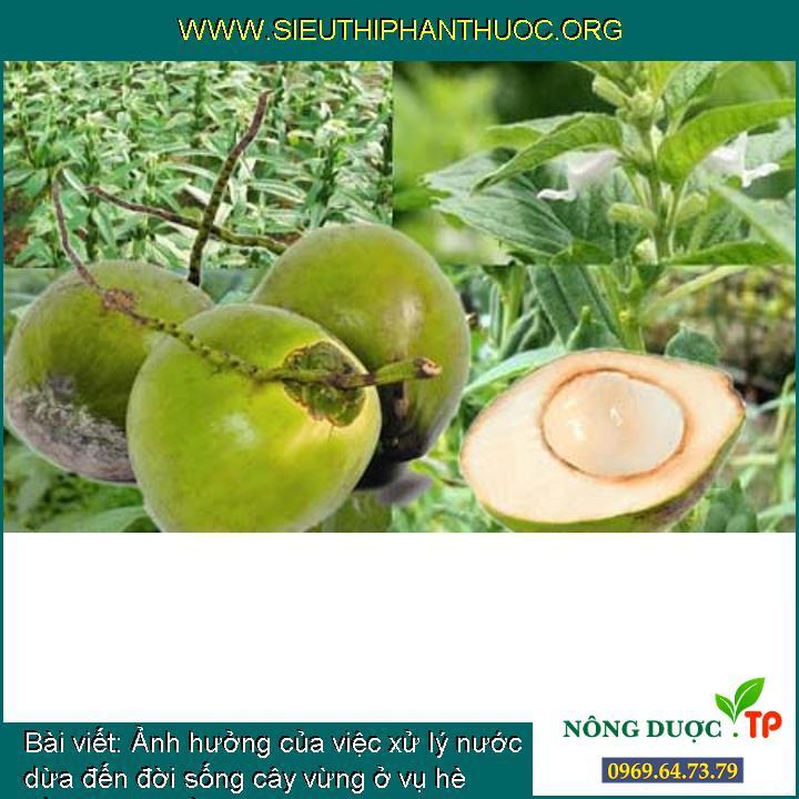 Ảnh hưởng của việc xử lý nước dừa đến đời sống cây vừng ở vụ hè trồng trong điều kiện thí nghiệm tại Đà Nẵng