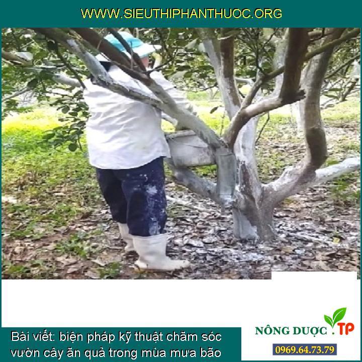 biện pháp kỹ thuật chăm sóc vườn cây ăn quả trong mùa mưa bão