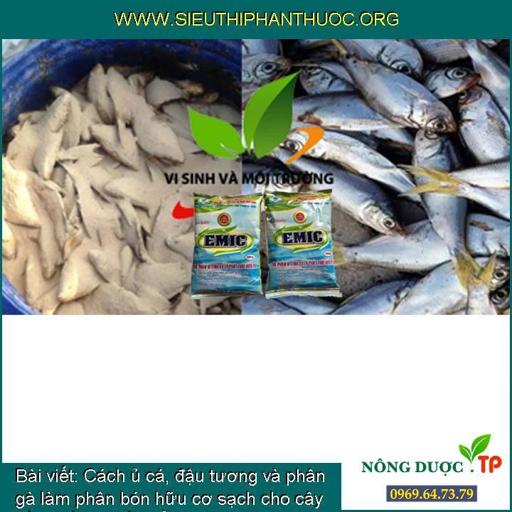 Cách ủ cá, đậu tương và phân gà làm phân bón hữu cơ sạch cho cây trồng bằng chế phẩm EM