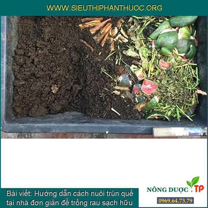 Hướng dẫn cách nuôi trùn quế tại nhà đơn giản để trồng rau sạch hữu cơ