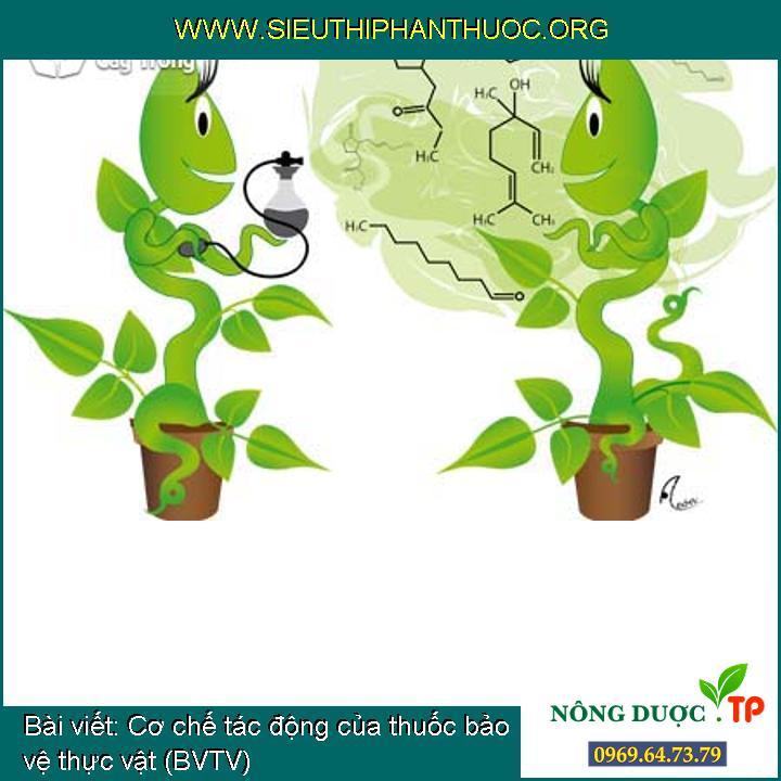 Cơ chế tác động của thuốc bảo vệ thực vật (BVTV)