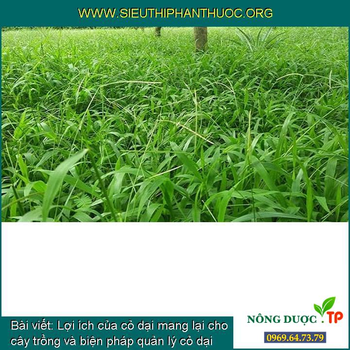 Lợi ích của cỏ dại mang lại cho cây trồng và biện pháp quản lý cỏ dại