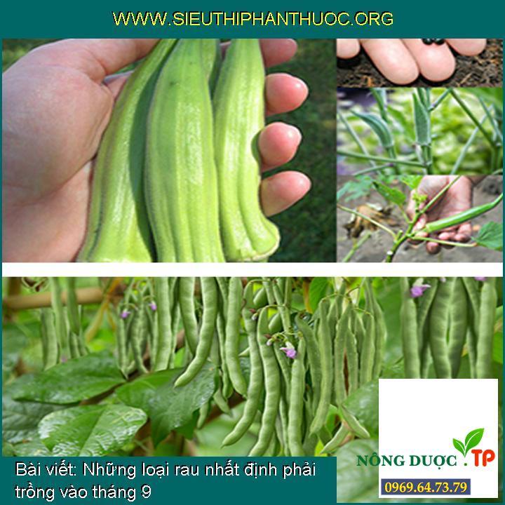 Những loại rau nhất định phải trồng vào tháng 9