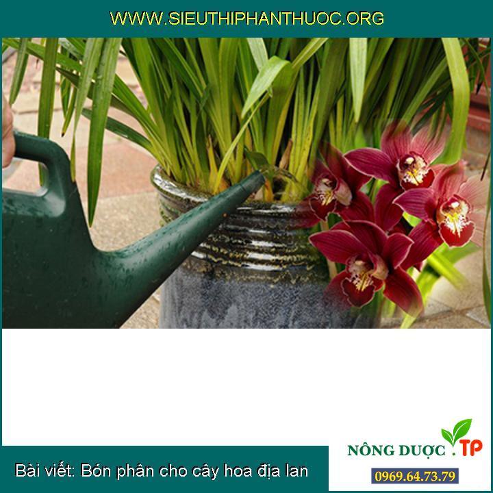 Bón phân cho cây hoa địa lan