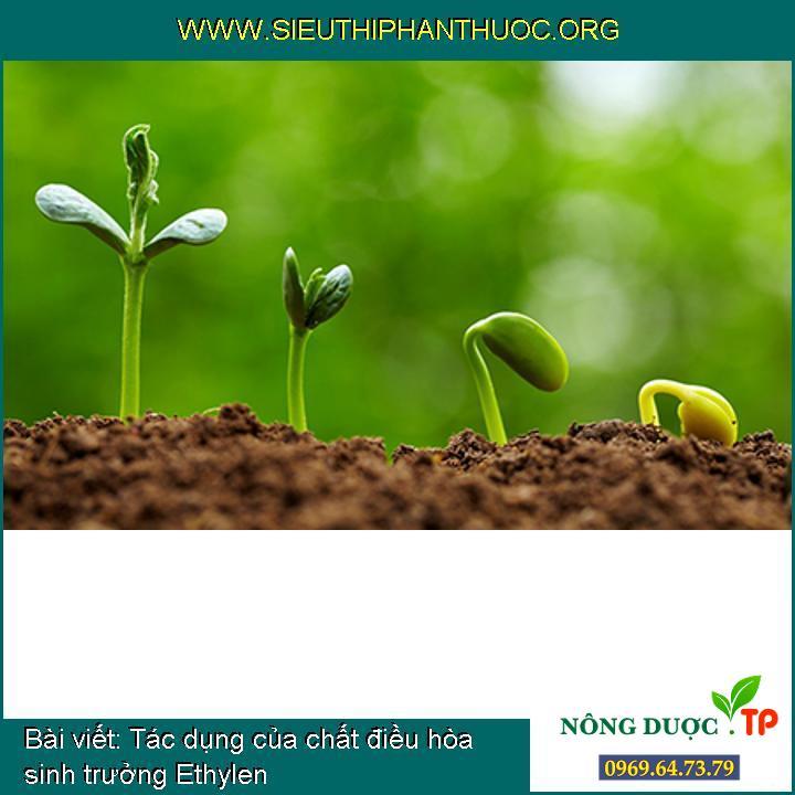 Tác dụng của chất điều hòa sinh trưởng Ethylen