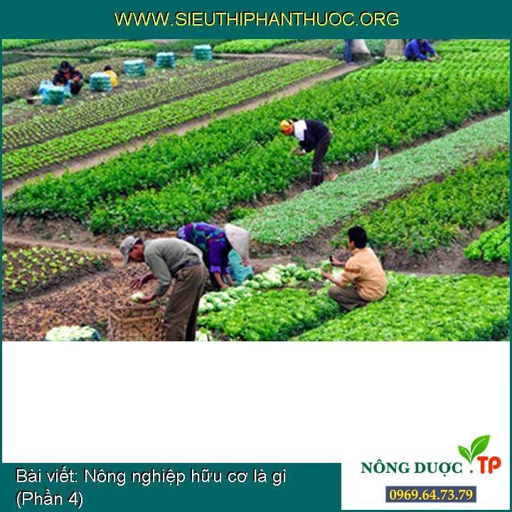 Nông nghiệp hữu cơ là gì (Phần 4)
