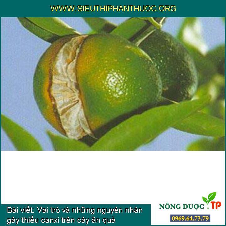 Vai trò và những nguyên nhân gây thiếu canxi trên cây ăn quả