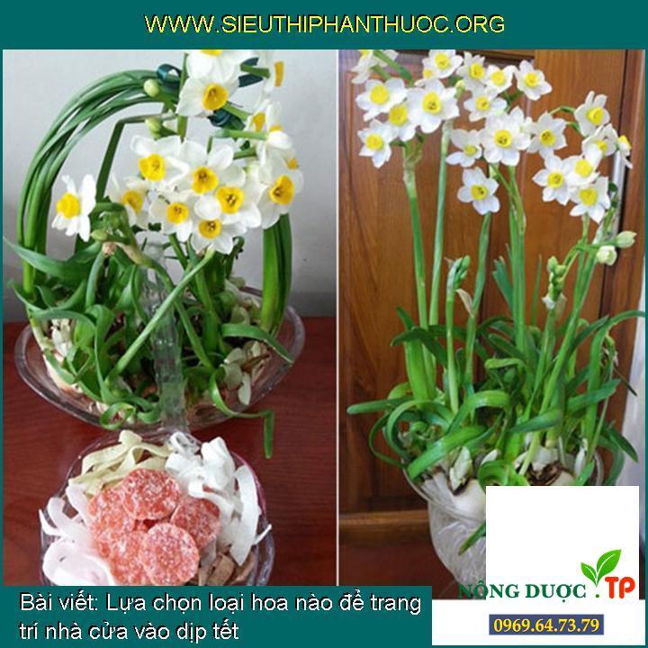 Lựa chọn loại hoa nào để trang trí nhà cửa vào dịp tết