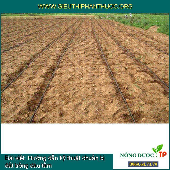 Hướng dẫn kỹ thuật chuẩn bị đất trồng dâu tằm