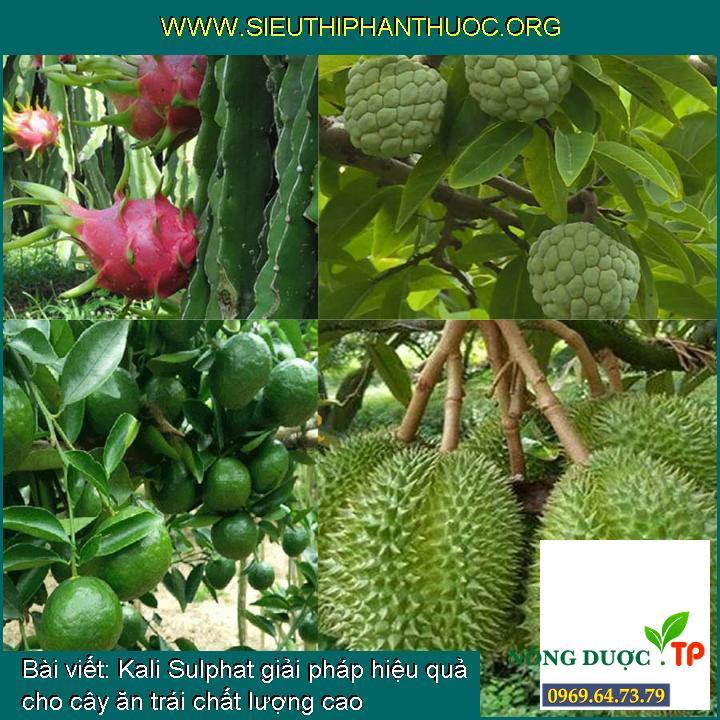 Kali Sulphat giải pháp hiệu quả cho cây ăn trái chất lượng cao
