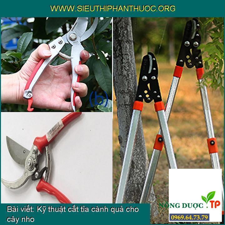 Kỹ thuật cắt tỉa cành quả cho cây nho