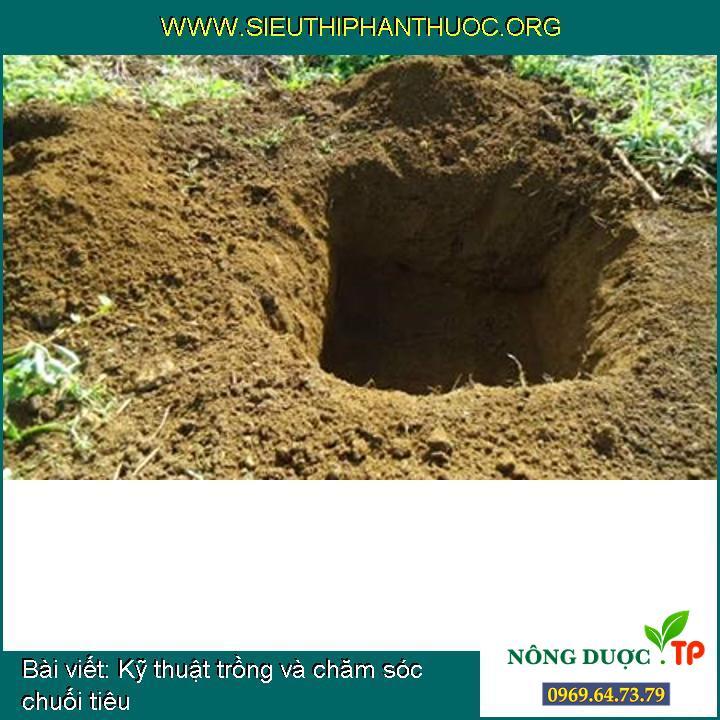 Kỹ thuật trồng và chăm sóc chuối tiêu