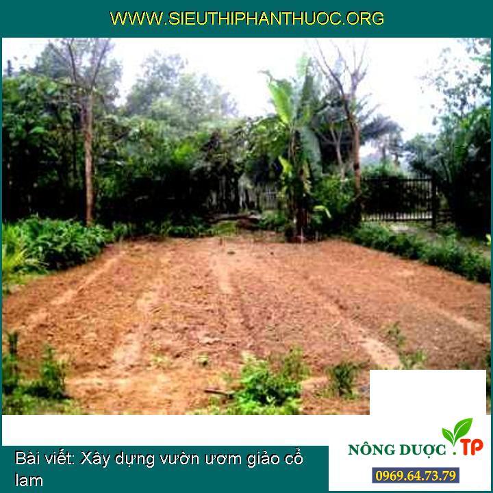 Xây dựng vườn ươm giảo cổ lam