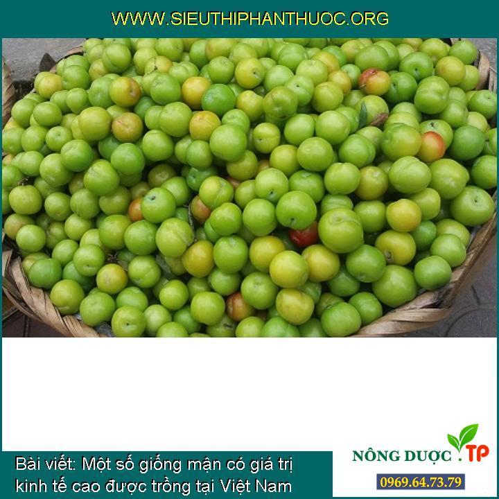 Một số giống mận có giá trị kinh tế cao được trồng tại Việt Nam