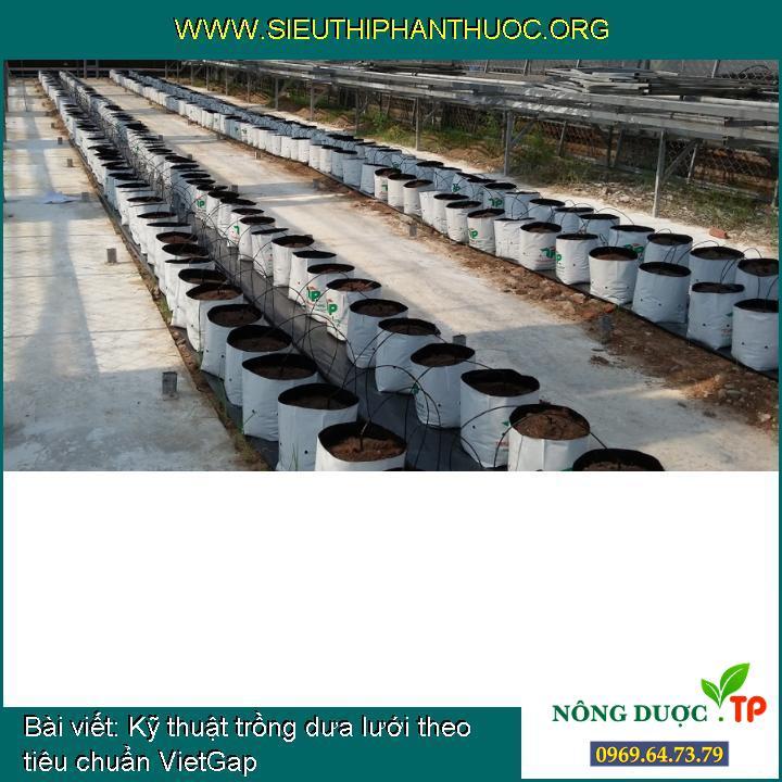 Kỹ thuật trồng dưa lưới theo tiêu chuẩn VietGap