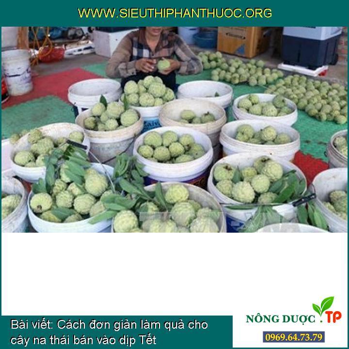 Cách đơn giản làm quả cho cây na thái bán vào dịp Tết