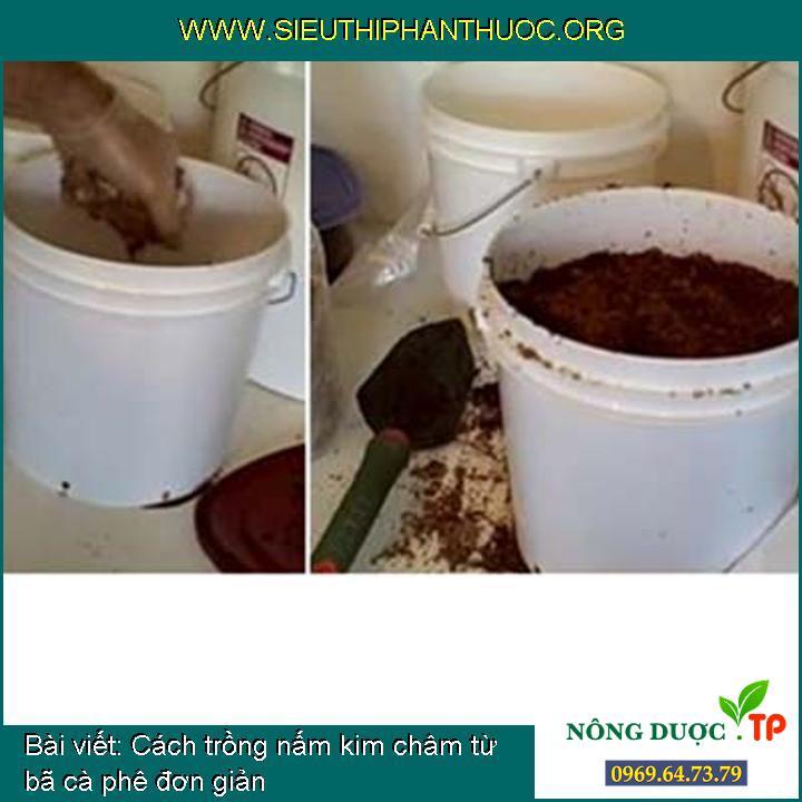 Cách trồng nấm kim châm từ bã cà phê đơn giản