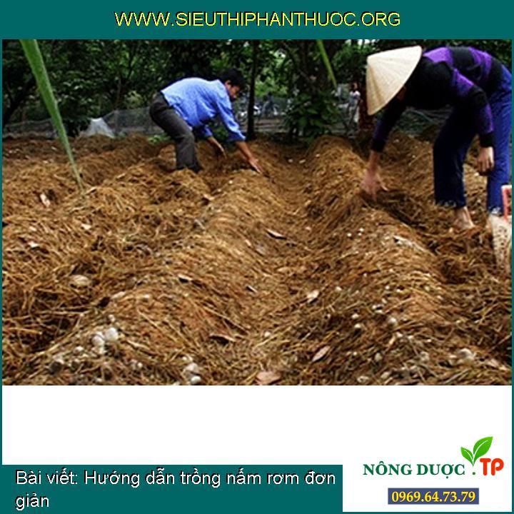 Hướng dẫn trồng nấm rơm đơn giản