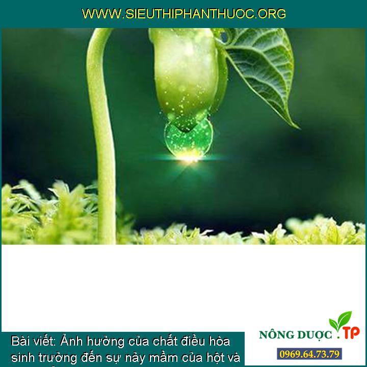 Ảnh hưởng của chất điều hòa sinh trưởng đến sự nảy mầm của hột và phát triển của cây con