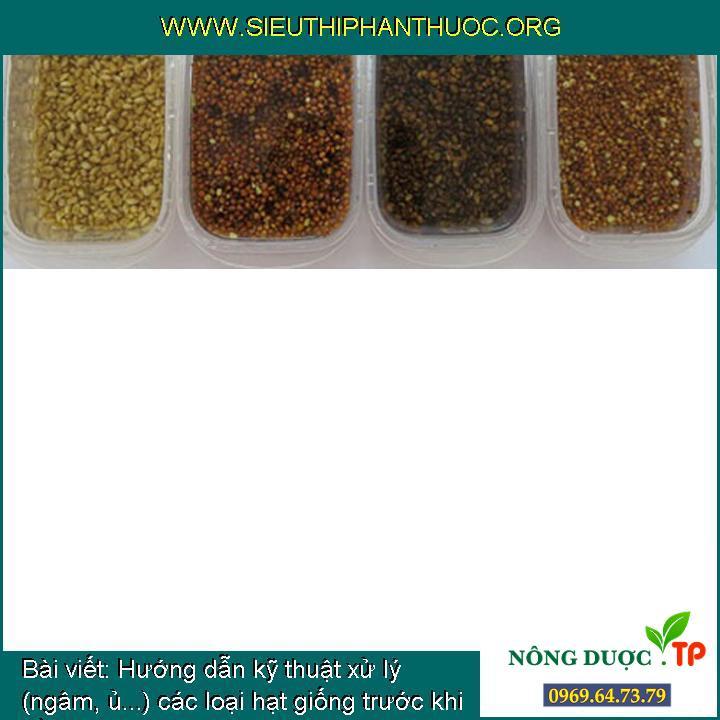 Hướng dẫn kỹ thuật xử lý (ngâm, ủ...) các loại hạt giống trước khi trồng