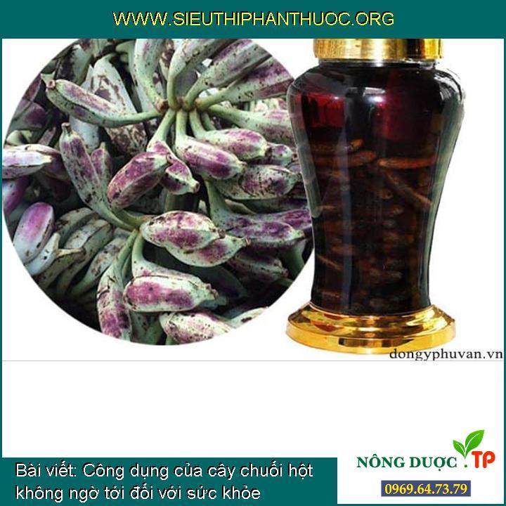 Công dụng của cây chuối hột không ngờ tới đối với sức khỏe