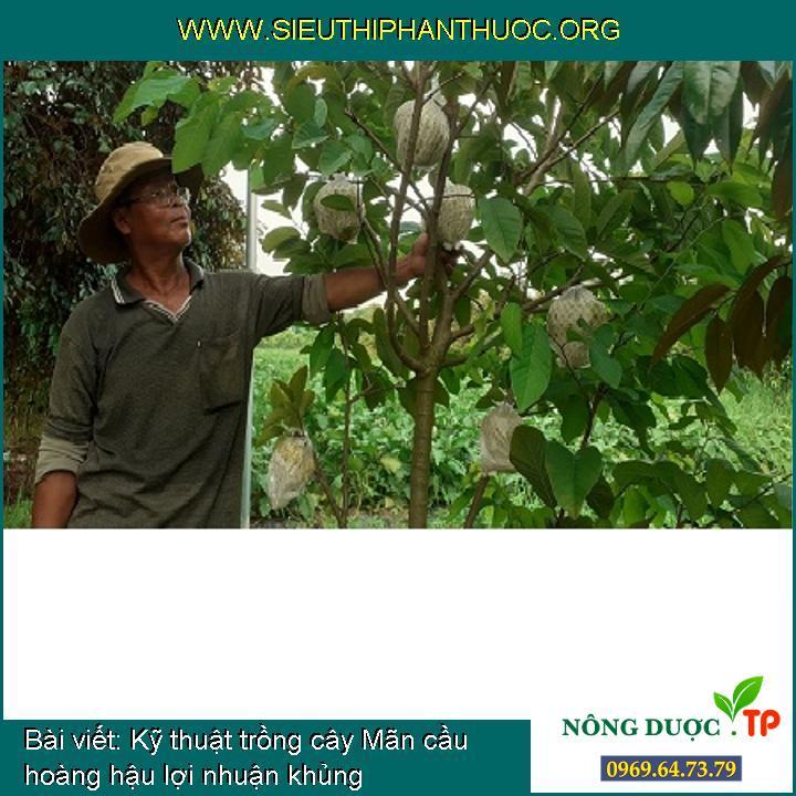 Kỹ thuật trồng cây Mãn cầu hoàng hậu lợi nhuận khủng