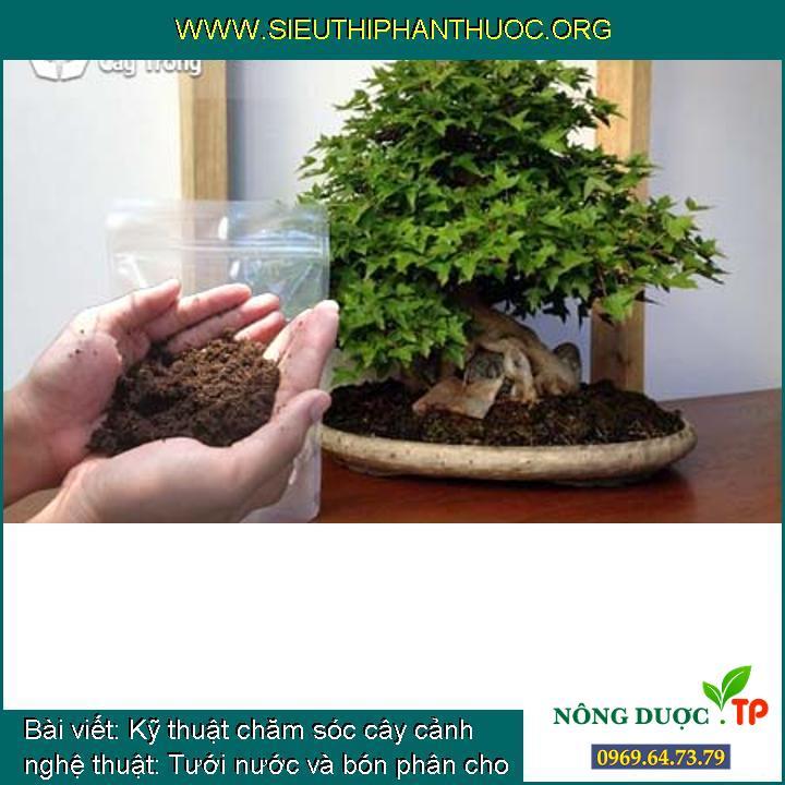 Kỹ thuật chăm sóc cây cảnh nghệ thuật: Tưới nước và bón phân cho Bonsai