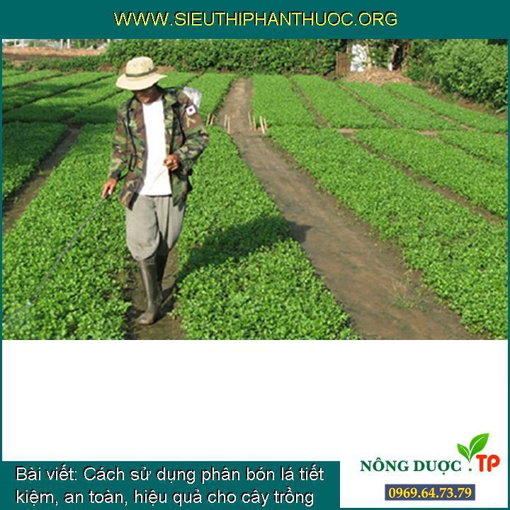 Cách sử dụng phân bón lá tiết kiệm, an toàn, hiệu quả cho cây trồng