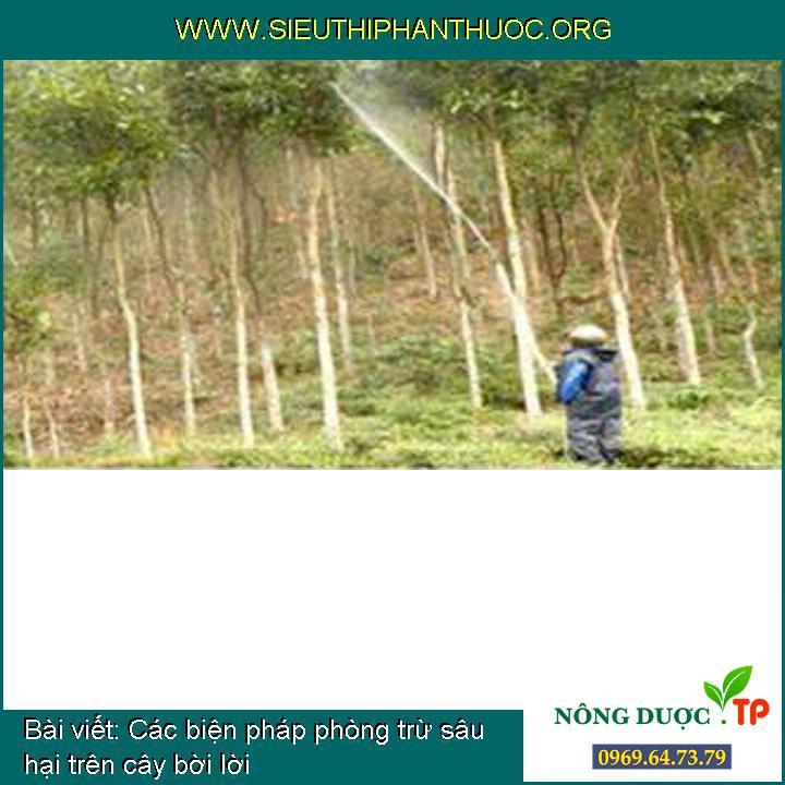 Các biện pháp phòng trừ sâu hại trên cây bời lời