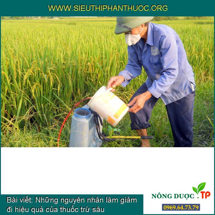 Những nguyên nhân làm giảm đi hiệu quả của thuốc trừ sâu