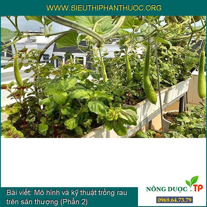 Mô hình và kỹ thuật trồng rau trên sân thượng (Phần 2)